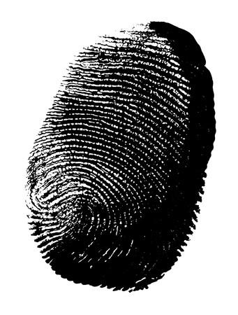 Printout of human fingerprint  with unique detail photo