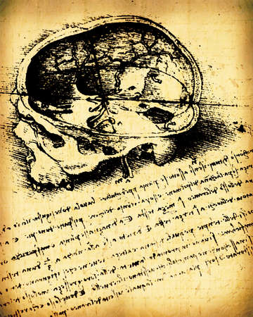Anatomy art by Leonardo Da Vinci from 1492 on textured background. Stock Photo - 8463043