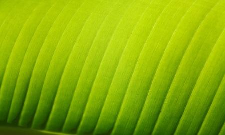 Close up of Green Leaf in Sri Lanka photo