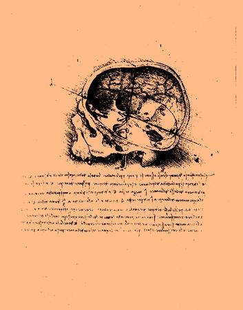 Anatomy art by Leonardo Da Vinci from 1492 on textured background.