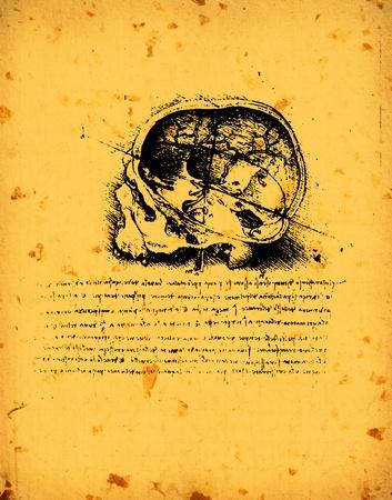 Anatomy art by Leonardo Da Vinci from 1492 on textured background. Stock Photo - 11565688
