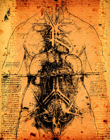 Anatomy art by Leonardo Da Vinci from 1492 on textured background. photo