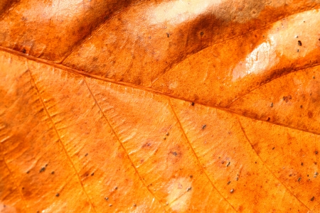 veined: Close up of   Leaf for background Stock Photo