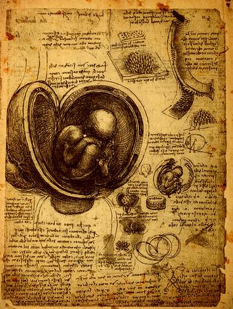 Close up of Old anatomy drawings by Leonardo Da Vinci