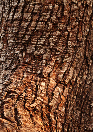 Close up of a tree trunk texture photo