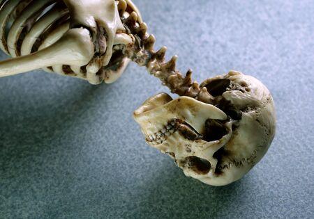 Miniature Human Skeleton Model Close Up