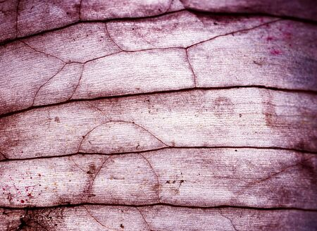 Microscopic close up of some tissue