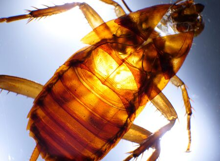 Macro close up of a cockroach insect analysis Stockfoto