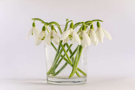 Spring snowdrop (Galanthus nivalis) flowers bouquet in a vase isolated on a white background. Air bubbles can be seen in the vase.