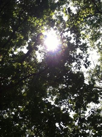 Beautiful sunlight through the trees