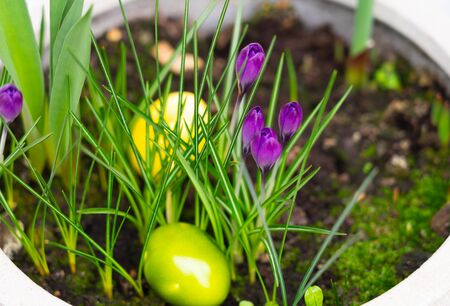 Yellow easter eggs in a pot with spring flowers
