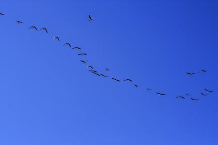 bandada de p�jaros: Una bandada de p�jaros volando en el cielo