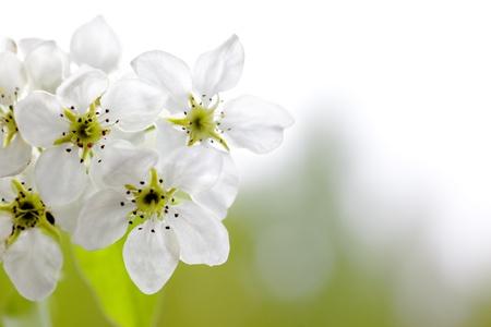 Blossoming. Macroshooting par une journ�e ensoleill�e. Banque d'images