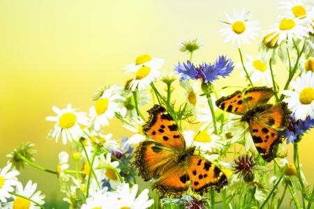 Encuentro inesperado de las mariposas en un prado Foto de archivo