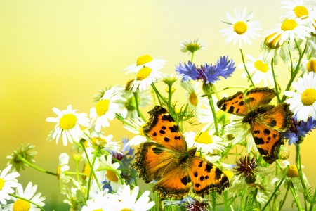 unexpected: Unexpected meeting of butterflies on a meadow Stock Photo