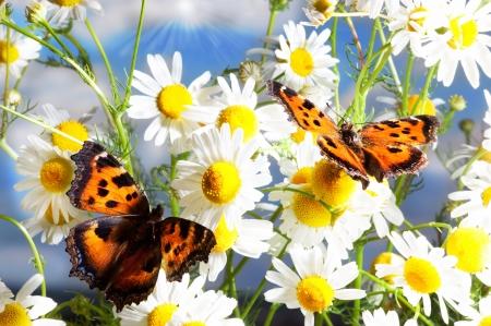 Deux papillons parmi les fleurs charmantes