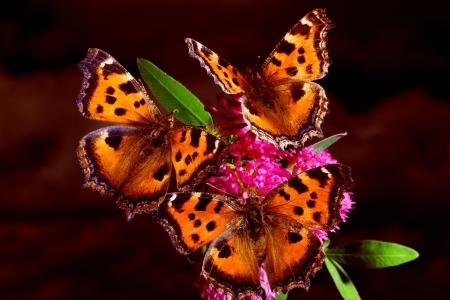 Tres mariposas en el tr�bol contra el cielo nocturno Foto de archivo