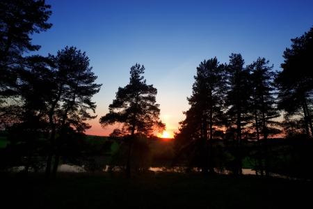 Solar morning en bois de pin Banque d'images