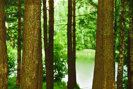 deciduous woodland: sunny forest on the shore of  lake Stock Photo