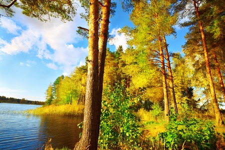 sunny forest on the shore of  lake Stock Photo