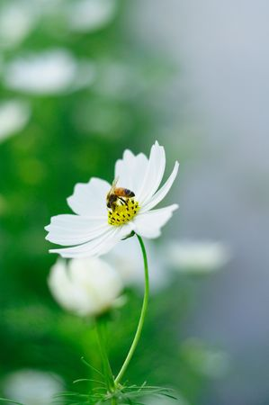 Flower and bee Stock Photo - 8046117