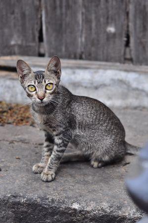 Cat Stock Photo - 8159115