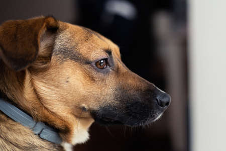 Cute brown dog close-up. Side view, small mongrel against dark background.