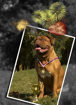 Bordeauxdog op een hondenshow