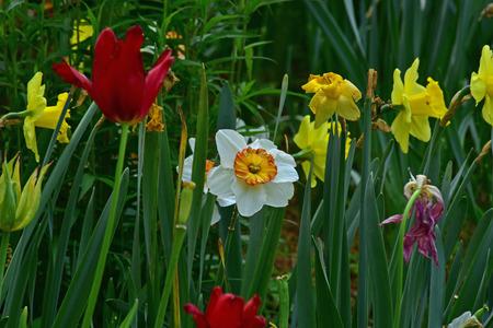 Flower garden Stock fotó