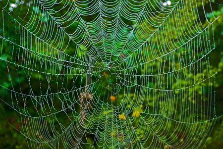 spider webs Stockfoto