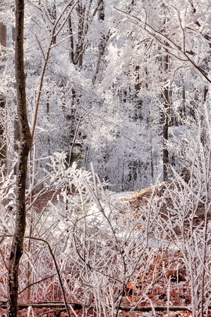 snow and frost on trees Imagens
