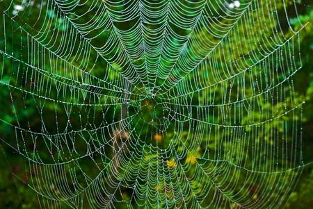Spiderweb with green forest background