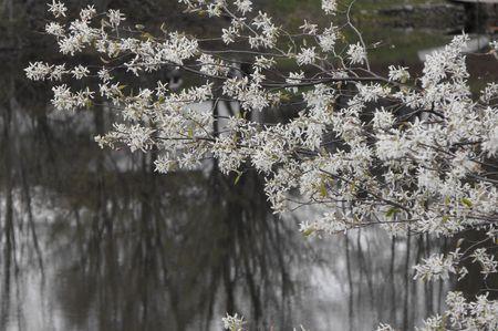 sprung: Spring has Sprung Stock Photo