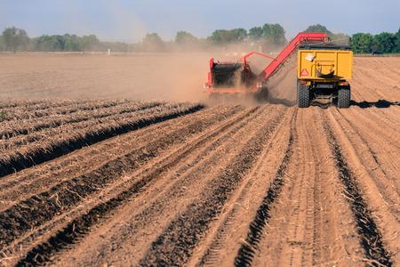 Het oogsten van aardappelen uit de grond met een oogstmachine