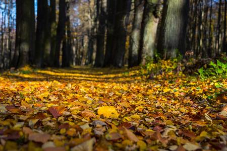 Gevallen bladeren in de herfst stadspark. Herfst landschap.