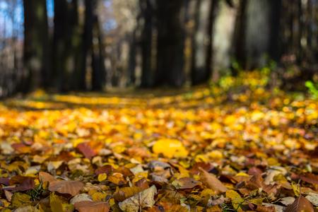 Fallen leaves in autumn city park. Autumn landscape.