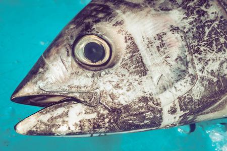 Tonijnkop op vismarkt
