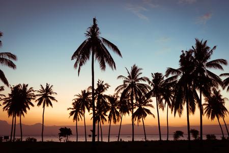 De palmen van de silhouetkokosnoot op strand bij zonsondergang.