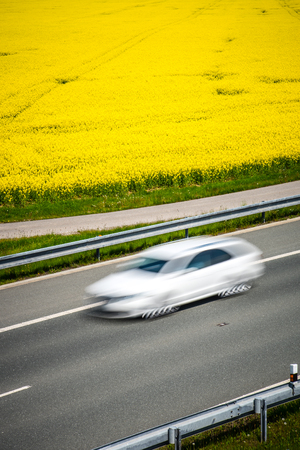 White car drives on a road through a blossom rapeseed field.