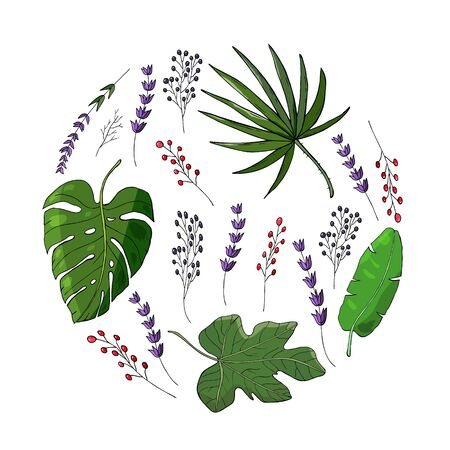 colored tropical leaves circle. Banana leaf vector with monstera leaf and fan palm leaf with fig leaf. Elderberry branch and lavender branch