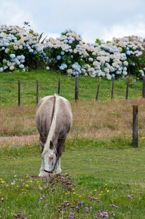 Horse grazing in paddock Stock Photo