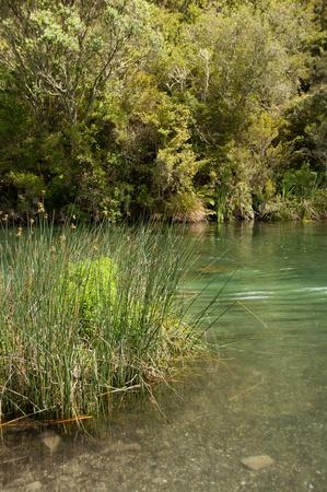 Trout spaening river Tarawera New Zealand