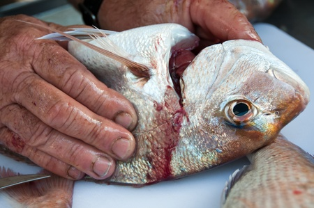 Fisherman removing gills from a snapper fish Stock Photo