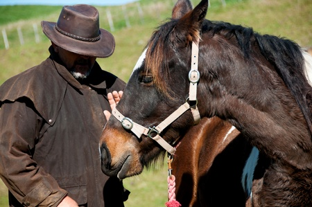 breaking in: Working with horse breaking in, training, horse whisperer Stock Photo