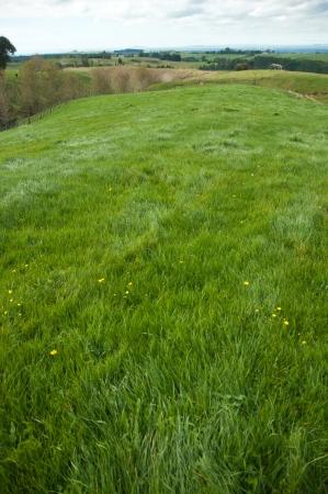 Pasture in paddock