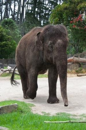 Elephant at the zoo Stock Photo