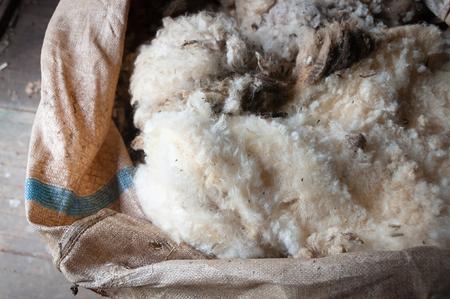 Sheep wool in shearing bale Foto de archivo
