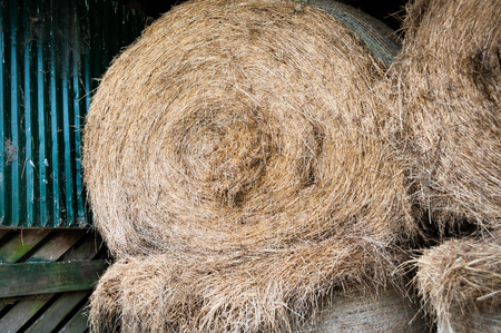 Hay Bales in barn for feeding out to cattle in winter