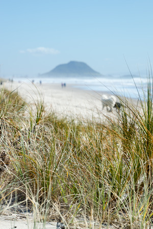 seawater: Tussock grasses on the seashore with the sea in the background on a fine summers day