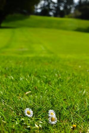 New Zealand Golf Course green grass